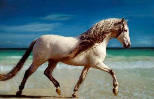 Un p 39 tit bout du monde - Grand galop le cheval volant ...